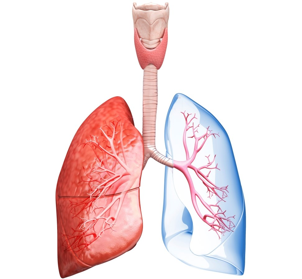 Precision Medicine May Pave the Way for Better Treatment in Asthma, COPD
