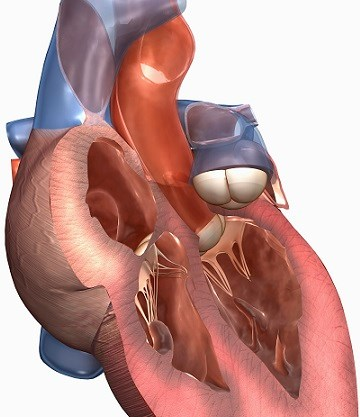 Strain analysis demonstrated worse right ventricular and atrial function in patients with PAH clinical worsening.