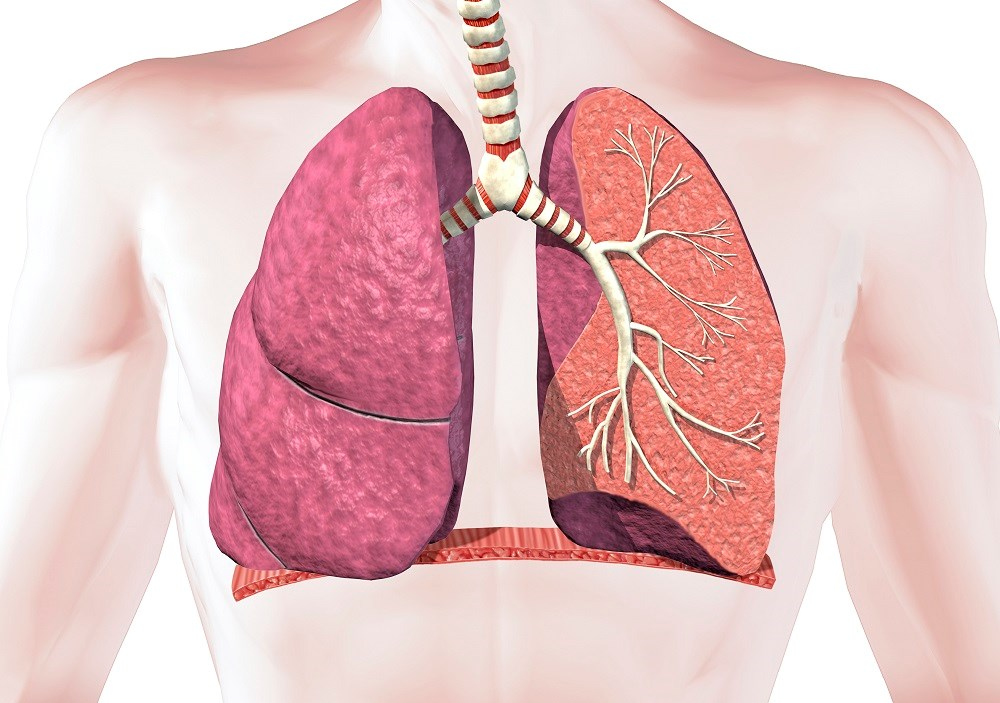 Guiding COPD Management Using Airway Branch Variation