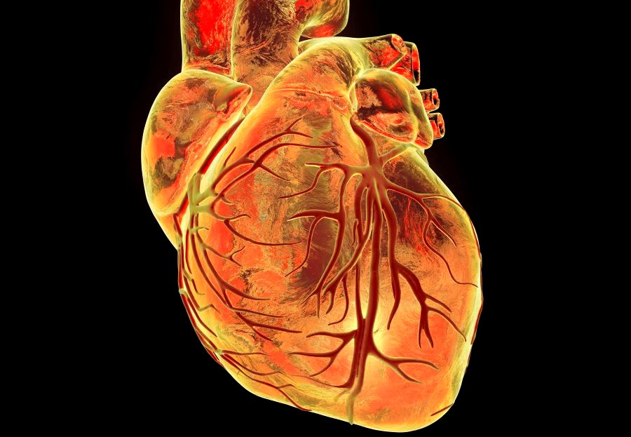 Patients with heart failure with preserved ejection fraction were older and had higher blood pressure and pulse wave velocity than those with reduced ejection fraction.
