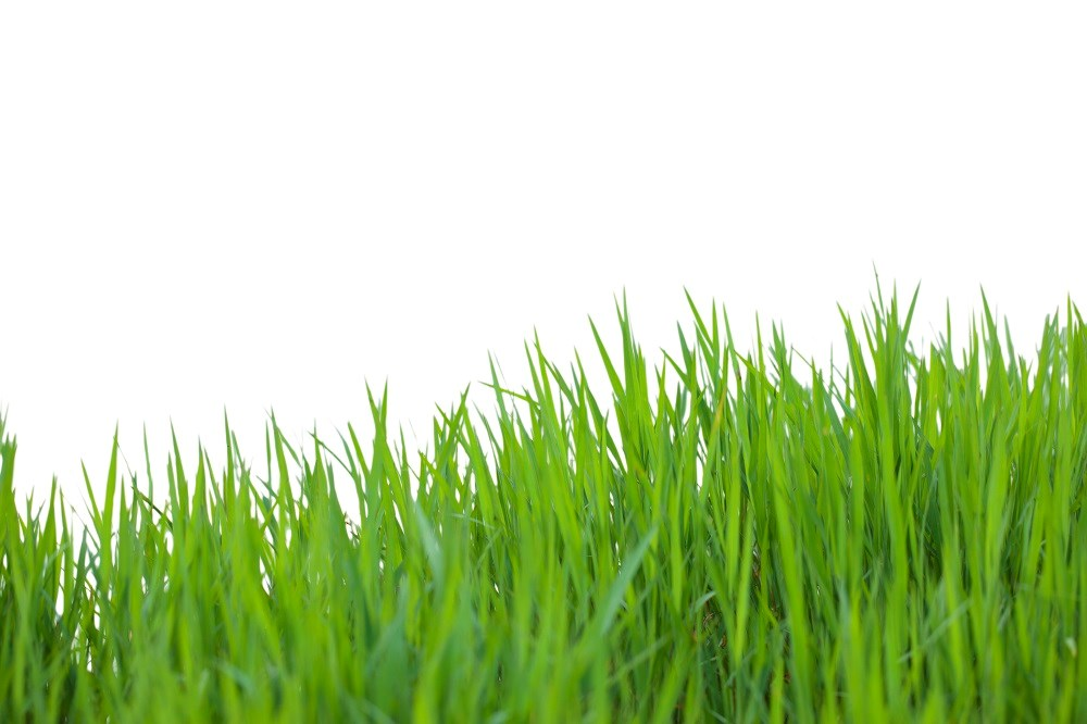 Immunotherapy With Grass Allergen Peptides Reduced Seasonal Allergy Symptoms