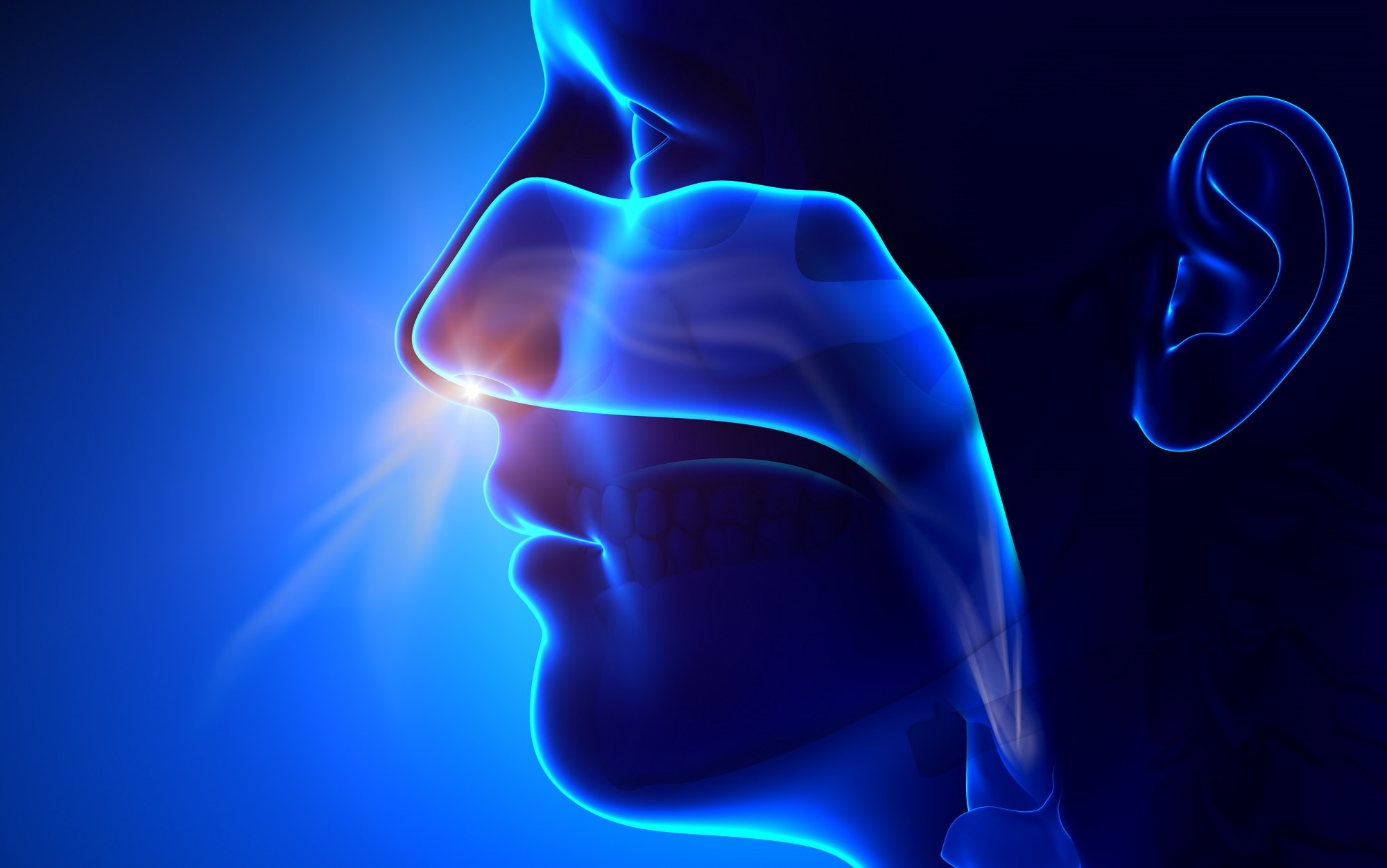 Nasal Microbiota Changes Linked to Obstructive Sleep Apnea, Inflammation