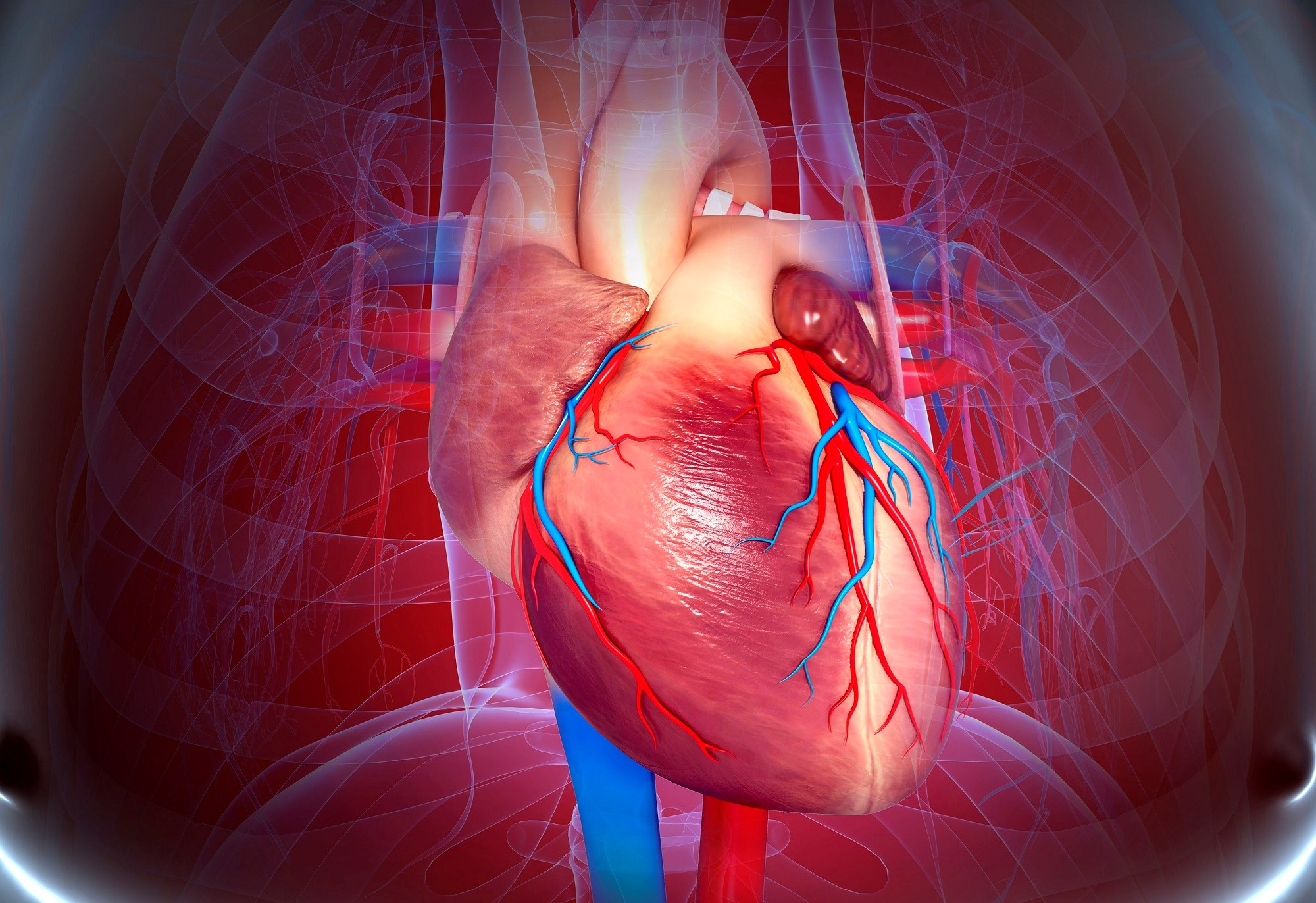 Active CVD Screening Should Be Conducted in Comorbid COPD, Obesity